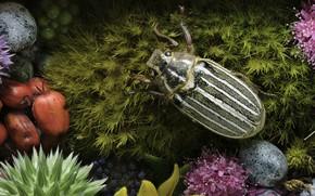 Картинка цветы, мох, жук, Martin Dollenkamp