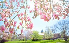 Картинка листья, свет, цветы, ветки, парк, фон, здание, весна, сад, бутоны, цветение, лужайка, боке, магнолия