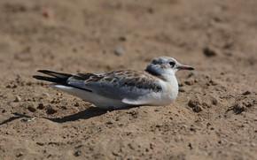 Картинка песок, лето, отдых, чайка