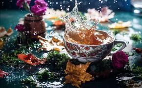 Картинка осень, листья, вода, цветы, брызги, чай, мох, чашка, боке