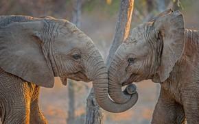 Картинка Африка, слоны, ЮАР, Kapama Private Game Reserve