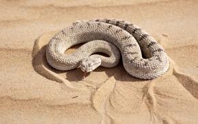 Картинка песок, солнце, змея, боке
