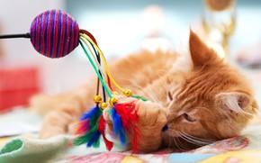 Картинка кошка, кот, игрушка, игра, лапа, перья, рыжий, лежит, плед, мордашка, разноцветные, яркие цвета, боке, перышки