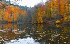 Картинка осень, лес, деревья, озеро, пруд, отражение, берег, листопад, водоем, краски осени, осенние листья, осенняя листва