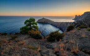 Картинка море, трава, деревья, пейзаж, природа, скалы, побережье, вечер, Крым, Новый Свет, Александр Плеханов