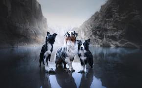 Картинка собаки, горы, озеро, трио, Австралийская овчарка, троица, Бордер-колли, Аусси