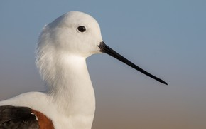 Картинка bird, eye, looking