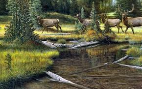 Картинка лес, берег, рисунок, картина, арт, живопись, олени, водоем, стадо, Ron Van Gilder
