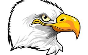 Картинка feathers, eagle, beak, penetrating gaze