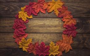 Обои осень, листья, фон, дерево, wood, background, autumn, leaves, осенние, maple