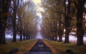 Картинка дорога, осень, туман