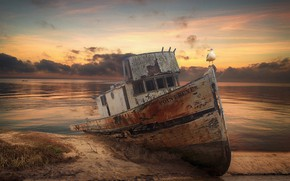 Картинка закат, птица, берег, лодка, чайка, катер, водоем, старая, затонувшая