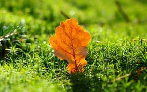 Картинка осень, трава, свет, дубовый, осенний листок