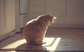 Картинка кошка, свет, дом