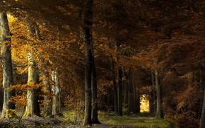 Картинка лето, деревья, природа
