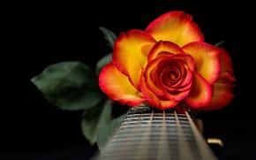 Картинка роза, гитара, струны, лепестки, гриф