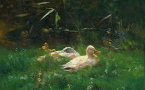 Картинка масло, картина, холст, Утки, 1904, Виллем Марис, Willem Maris