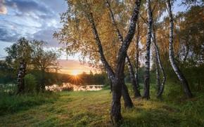 Картинка лето, трава, солнце, лучи, деревья, пейзаж, закат, природа, пруд, берёзы, роща