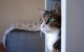 Картинка кошка, глаза, кот, взгляд, морда, серый, фон, комната, цвет, кровать, портрет, зеленые, полосатый, оттенок, котэ, …