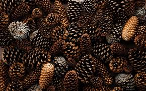 Картинка Шишки, Textures & Materials, by Thijs van Velsen, Сосновые Шишки, Pine cones, Thijs van Velsen