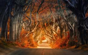 Картинка Природа, Дорога, Осень, Деревья, Лес, Свет, Путь, Лучи, Стволы, Autumn, Road, Forest, Trees, Trunks, Флора, …
