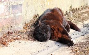 Картинка спит, лежит на боку, черная кошка, кирпичная кладка