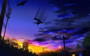 Картинка закат, город, вороны, лэп