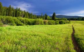 Картинка зелень, поле, лес, лето, трава, цветы, горы, синева, луг, дорожка, тропинка