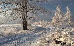 Картинка зима, дорога, снег, деревья, пейзаж, природа, кусты, Прибайкалье
