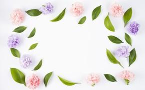 Картинка листья, цветы, фон, розовый, бутоны, fresh, pink, flowers, композиция, violet, гвоздики