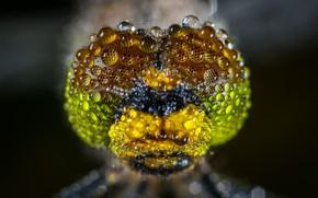 Картинка Макро, Роса, Стрекоза, Beautiful, Little, Насекомое, Macro, Insect, Dragonfly, Dew, Close-Up, Капли воды, Water Droplet, …