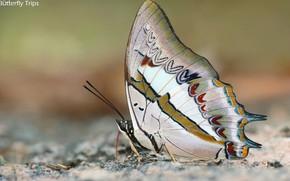Картинка макро, фон, бабочка, красавица