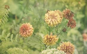 Картинка осень, лето, цветы, оранжевый