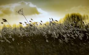 Картинка трава, природа, цвет