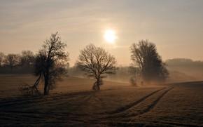 Картинка поле, природа, дерево
