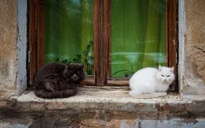 Картинка кошки, дом, окно