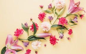 Картинка цветы, фон, лилии, лепестки, colorful, розовые, pink, flowers, petals, composition, floral