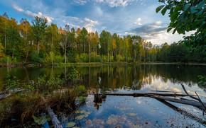 Картинка осень, лес, пейзаж, природа, озеро, отражение