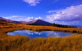 Картинка лес, облака, горы, озеро, отражение, синева, склоны, водоем, сухая трава