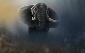 Картинка Рисунок, Слон, Арт, Art, Животное, Elephant, Animal, Гигант, Giant, Figure, Tusks, Бивни, Jaleel Muhammed, by …