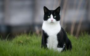 Картинка кошка, трава, кот, черно-белый