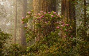 Картинка лес, деревья, утро, цветение, Doug Shearer