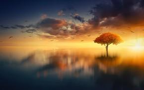 Картинка Rays, Небо, Вода, Dawn, Sea, Горизонт, Облака, Sun Rays, Океан, Лучи, Water, Отражение, Море, Sunrise, …