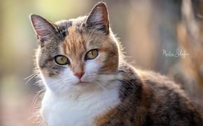 Картинка кошка, глаза, фото, Martin Schаfer