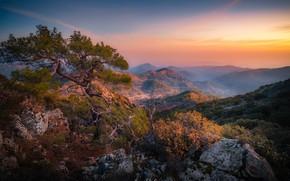 Картинка пейзаж, горы, природа, туман, дерево, скалы, утро, сосна, Кипр