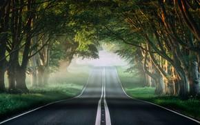 Картинка дорога, зелень, лес, трава, солнце, деревья, ветки, туман, утро, шоссе, Andi Campbell-Jones