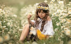 Картинка цветы, ромашки, луг, девочка, котёнок, друзья, венок, локоны