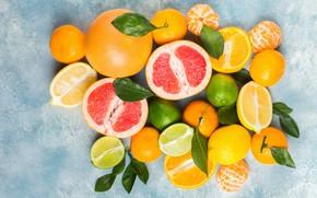 Картинка листья, фон, апельсины, лайм, фрукты, много, разные, лимоны, грейпфрут, мандарины, цитрусовые, ассорти
