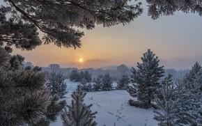 Картинка зима, солнце, снег, деревья, пейзаж, следы, природа, туман, рассвет, утро, сосны, Александр Макеев
