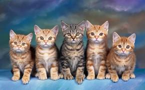 Картинка взгляд, кошки, синий, котенок, серый, фон, голубой, лапа, котята, команда, котёнок, малыши, рыжие, компания, полосатый, ...